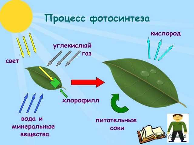 Формула сульфита калия в химии