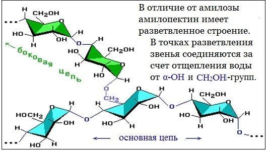 Гидролиз крахмала, уравнения и примеры