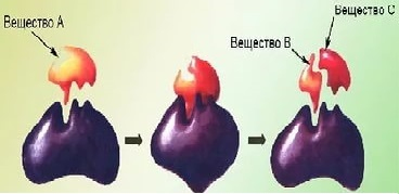 Аминокислоты и белки