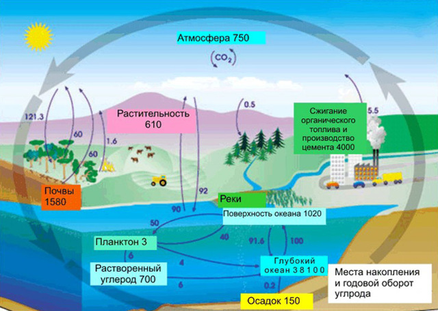 Углерод и его характеристики