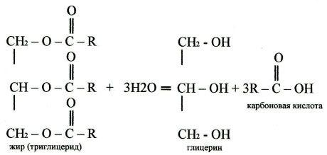 Гидролиз органических веществ, уравнения и примеры