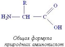 Формулы аминокислот в химии
