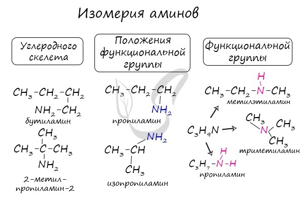 Формула амина в химии