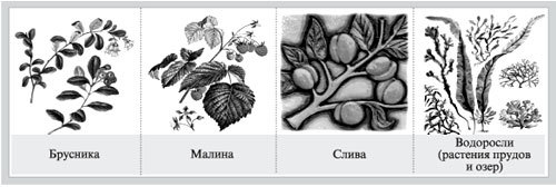 Гидролиз дисахаридов, уравнения и примеры